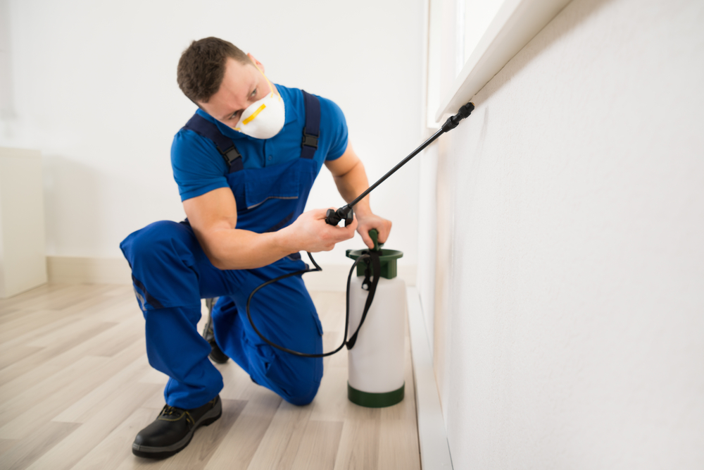 Hiring an Exterminator Is the Ideal Solution for Tackling Annoying Bed Bug Trouble
