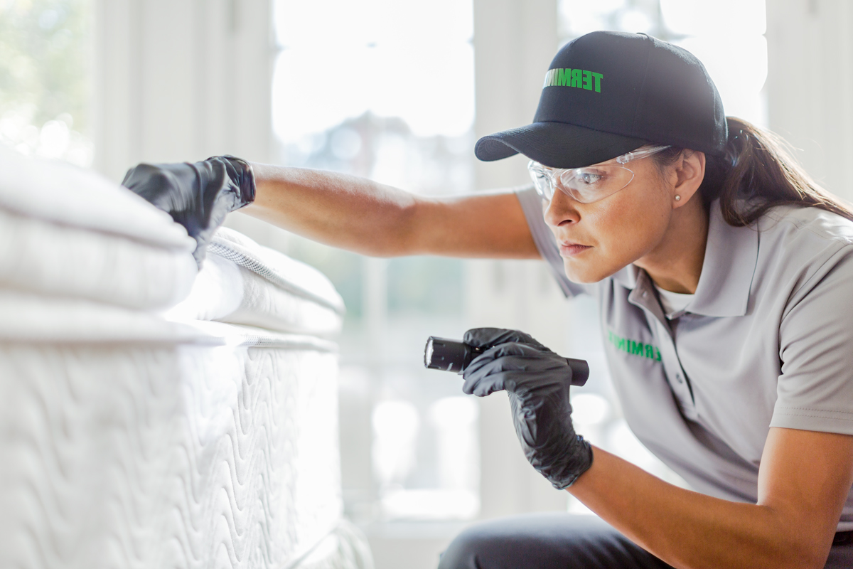 Is a Professional Exterminator the Answer for Bed Bug Extermination?